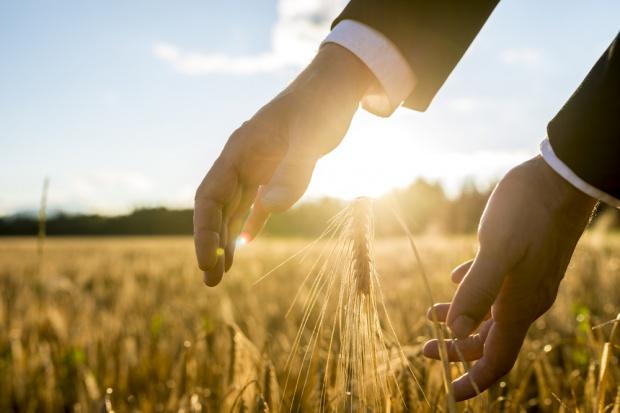 USDA: Więcej soi i rzepaku, mniej pszenicy i kukurydzy