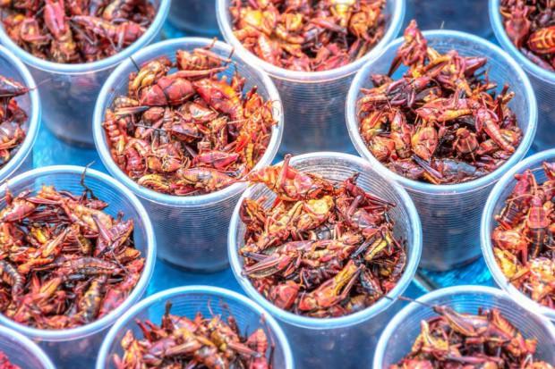 Jadalne insekty w restauracji w Tokio