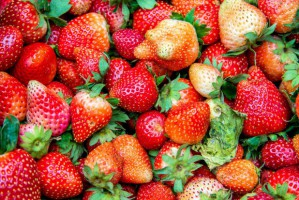 Są szanse na wysokie ceny truskawek w nadchodzącym sezonie