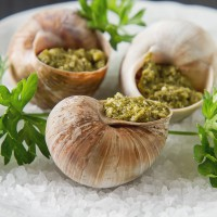 Rusza sezon zbierania ślimaków