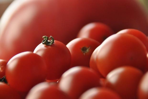 Rynek pomidorów: Ruszyła