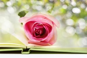 Biedronka do zakupu książki dołącza różę