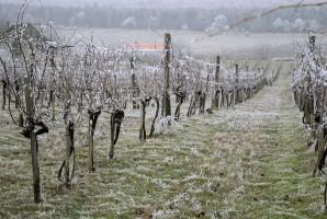 Włochy: 100 mln euro strat w rolnictwie z powodu ataku zimna