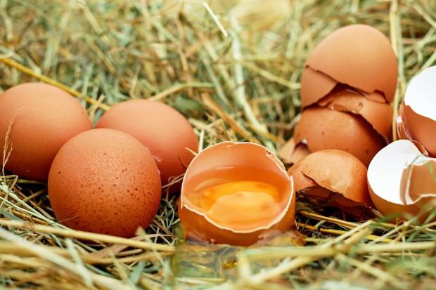 Wartość odżywcza jaj konsumpcyjnych pozyskiwanych od kur niosek utrzymywanych w różnych systemach