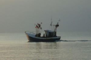 MSC chce certyfikować 20 procent połowów morskich na świecie