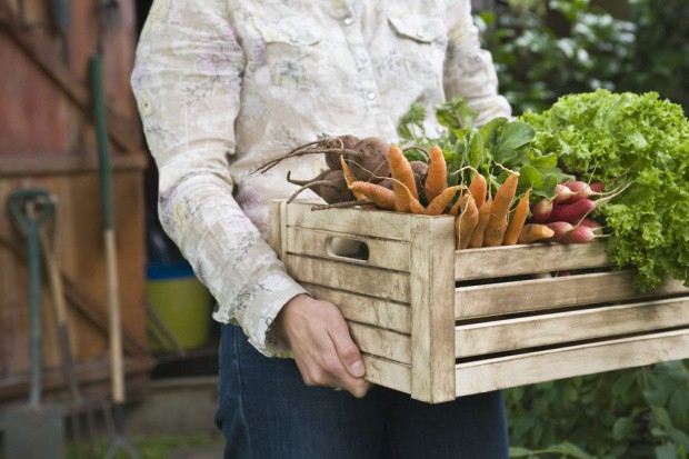 Rynek żywności ekologicznej ma swoje