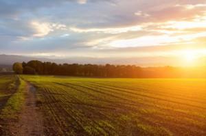 W marcu 2017 r. koniunktura w rolnictwie bez zmian - analiza IERiGŻ