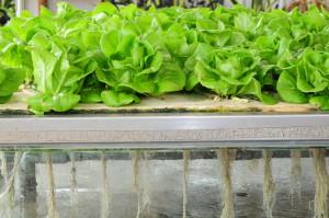 Carrefour eksperymentuje z miejskim rolnictwem