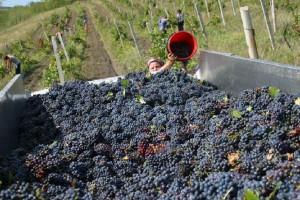 W hipermarketach sieci Carrefour specjalna akcja promująca wina Mołdawii
