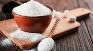 Wysokie ceny cukru zwiększyły zyski koncernów cukrowniczych