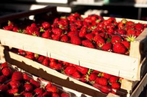 Plantatorzy truskawek we Francji splajtowaliby bez Polaków