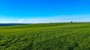 Rząd zatwierdził polskie priorytety dot. wspólnej polityki rolnej po 2020