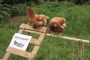 Kolejna sieć handlowa wycofuje się ze sprzedaży jajek z chowu klatkowego