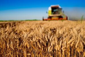 ARiMR: Do końca maja rolnicy mogą składać wnioski o tegoroczne dopłaty