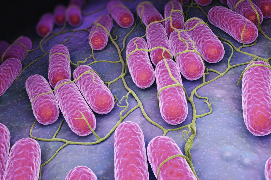 Nagły i wysoki wzrost zachorowań na salmonellozę