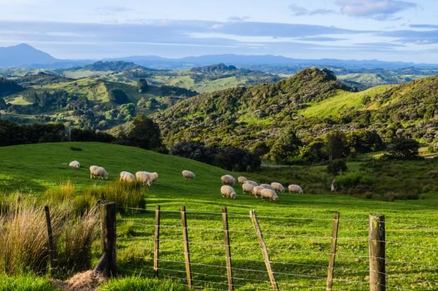 Rekordowa produkcja mleka w Nowej Zelandii w kwietniu
