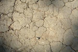 Straty klęskowe w rolnictwie już oszacowano na blisko 46 mln zł