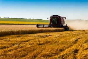 2016 rok był rekordowy dla węgierskiego rolnictwa