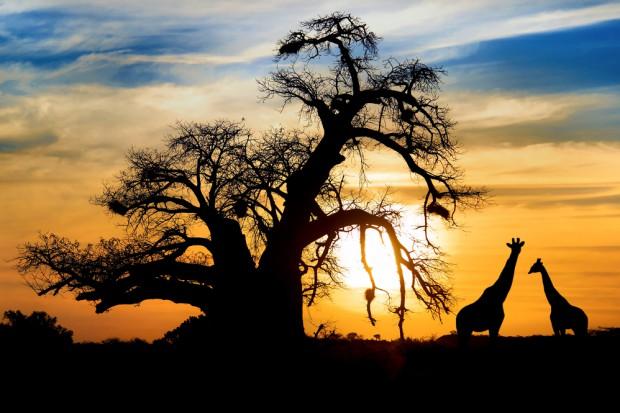 G7: Afryka potrzebuje innowacji i infrastruktury