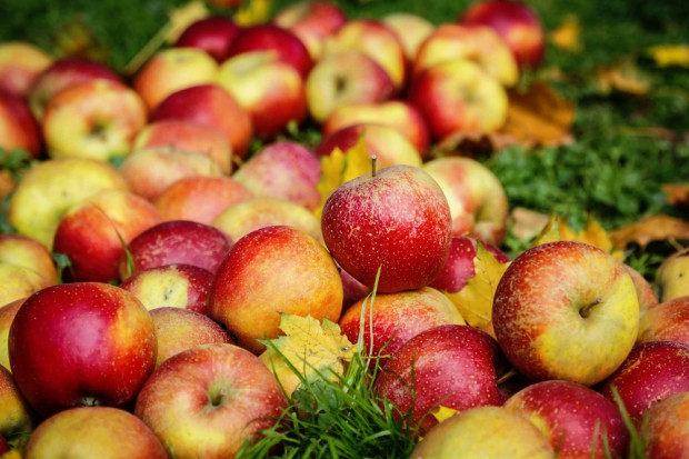 Eksport jabłek do Chin: Z dużej chmury mały deszcz?