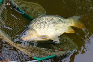 """Hodowcy ryb obawiają się utraty rekompensat. """"Część gospodarstw zamknie działalność"""""""