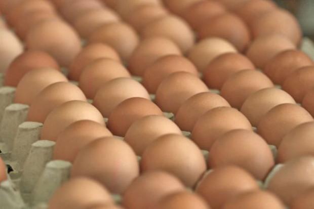 Odejście od jaj z chowu klatkowego nie doprowadzi do dużego wzrostu cen w sklepach