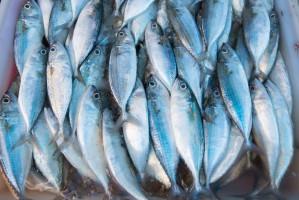 ONZ wzywa do działań na rzecz ochrony zasobów morskich