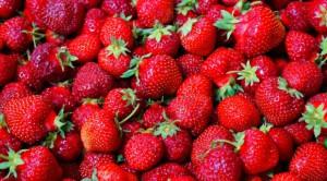 Średnie ceny truskawek do przetwórstwa ukształtują się na wysokim poziomie