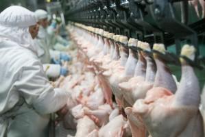 Ptasia grypa nie powstrzymała eksportu polskiego drobiu