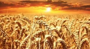 Nexbio stawia na testy DNA do wczesnego wykrywania chorób zbóż