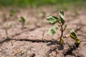 IUNG: rośnie deficyt wody dla roślin uprawnych