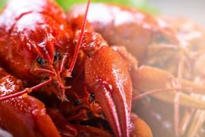 Włoski Sąd Najwyższy: Trzymanie homarów w lodzie to przestępstwo