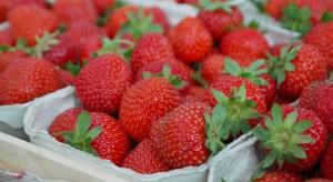Giełda Goławin: Producenci truskawek zawyżają ceny owoców
