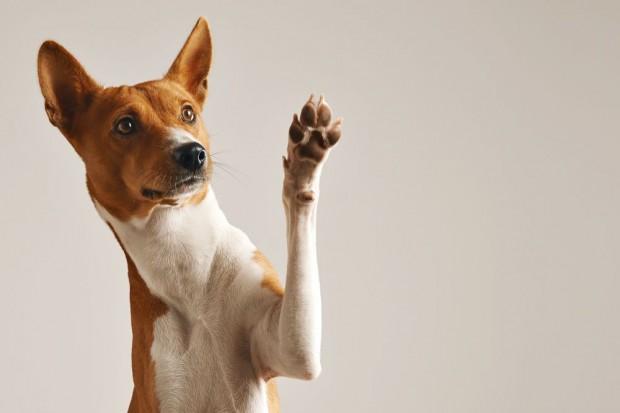 Szykują się protesty przeciwko festiwalowi psiego mięsa w Chinach