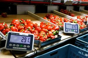 Zdjęcie numer 3 - galeria: Portalspozywczy.pl z wizytą u producentów warzyw w Belgii i Holandii (zdjęcia+wideo)