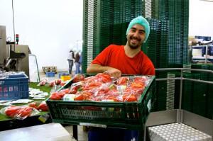 Zdjęcie numer 4 - galeria: Portalspozywczy.pl z wizytą u producentów warzyw w Belgii i Holandii (zdjęcia+wideo)