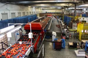 Zdjęcie numer 6 - galeria: Portalspozywczy.pl z wizytą u producentów warzyw w Belgii i Holandii (zdjęcia+wideo)