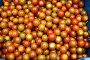 Zdjęcie numer 10 - galeria: Portalspozywczy.pl z wizytą u producentów warzyw w Belgii i Holandii (zdjęcia+wideo)
