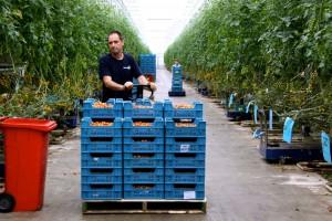Zdjęcie numer 13 - galeria: Portalspozywczy.pl z wizytą u producentów warzyw w Belgii i Holandii (zdjęcia+wideo)