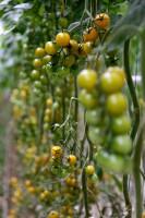 Zdjęcie numer 14 - galeria: Portalspozywczy.pl z wizytą u producentów warzyw w Belgii i Holandii (zdjęcia+wideo)