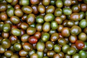 Zdjęcie numer 11 - galeria: Portalspozywczy.pl z wizytą u producentów warzyw w Belgii i Holandii (zdjęcia+wideo)