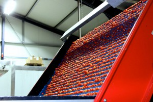 Zdjęcie numer 17 - galeria: Portalspozywczy.pl z wizytą u producentów warzyw w Belgii i Holandii (zdjęcia+wideo)