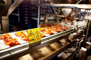 Zdjęcie numer 18 - galeria: Portalspozywczy.pl z wizytą u producentów warzyw w Belgii i Holandii (zdjęcia+wideo)