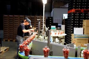 Zdjęcie numer 22 - galeria: Portalspozywczy.pl z wizytą u producentów warzyw w Belgii i Holandii (zdjęcia+wideo)