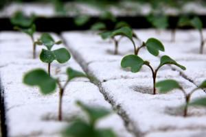 Zdjęcie numer 27 - galeria: Portalspozywczy.pl z wizytą u producentów warzyw w Belgii i Holandii (zdjęcia+wideo)