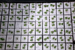 Zdjęcie numer 30 - galeria: Portalspozywczy.pl z wizytą u producentów warzyw w Belgii i Holandii (zdjęcia+wideo)