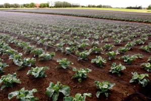 Zdjęcie numer 32 - galeria: Portalspozywczy.pl z wizytą u producentów warzyw w Belgii i Holandii (zdjęcia+wideo)