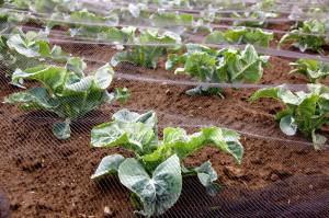 Zdjęcie numer 33 - galeria: Portalspozywczy.pl z wizytą u producentów warzyw w Belgii i Holandii (zdjęcia+wideo)