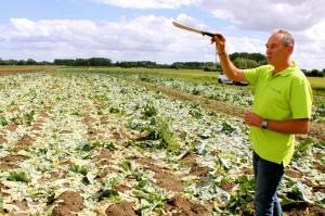Zdjęcie numer 34 - galeria: Portalspozywczy.pl z wizytą u producentów warzyw w Belgii i Holandii (zdjęcia+wideo)