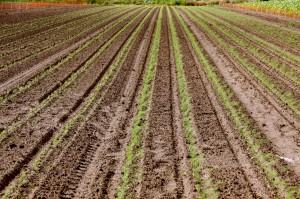 Zdjęcie numer 31 - galeria: Portalspozywczy.pl z wizytą u producentów warzyw w Belgii i Holandii (zdjęcia+wideo)
